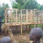 Building of Chicken Coup